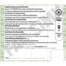 Certificato di Garanzia adesivo personalizzato